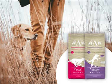 cibo-per-cani-da-caccia